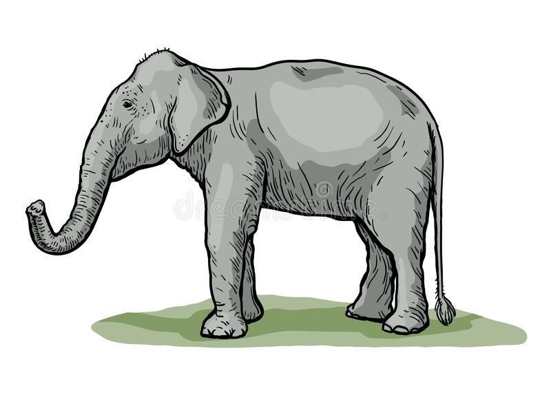 Usamljeni slon